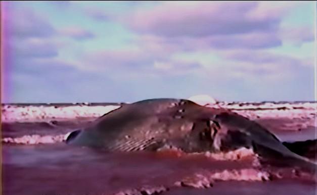 blue-whale-norway-prince-edward-island-1987-youtube